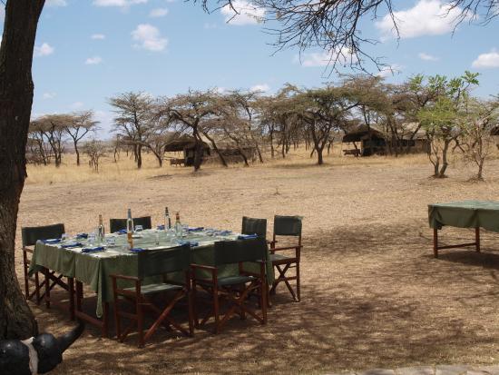 Mara Bush Houses, Asilia Africa: comedor bajo las acacias