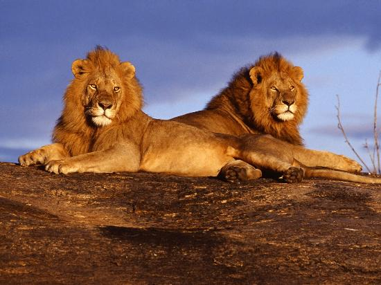 Opulent Africa Tours - Day Tours
