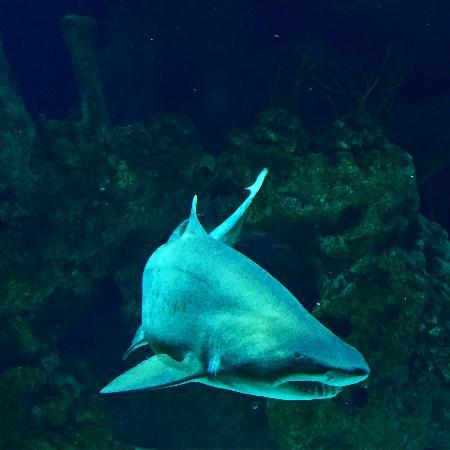 Fakieh Aquarium Photo