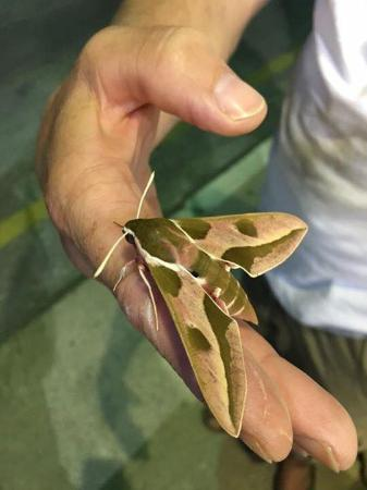 Costas & Chrysoula: found a big moth,