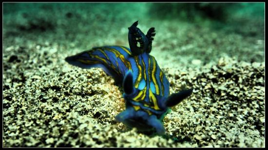 Calahonda, สเปน: Nudibranch in Gibraltar