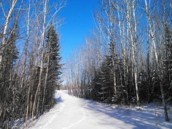 Hines, MN: Winter Trails