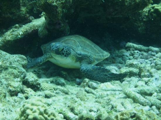 Caribbean Court Bonaire - Breezy Bonaire: Turtle