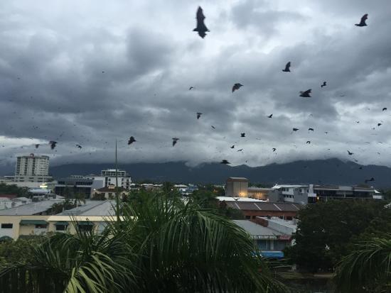 Bats In Hotel Room