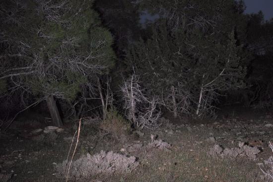 Aphrodite Trail: Сосны