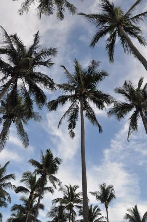 Coconut Beach Resort : перед отелем