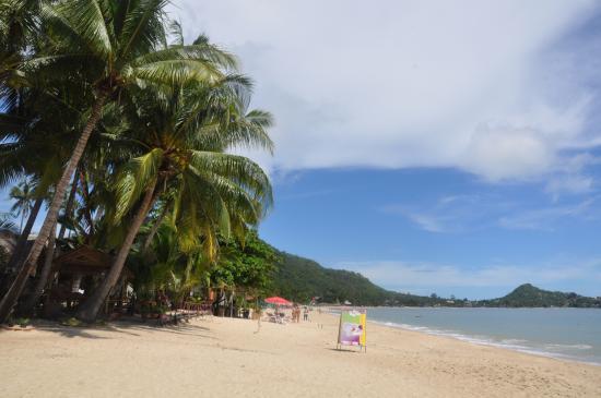 Coconut Beach Resort : пляж перед отелем