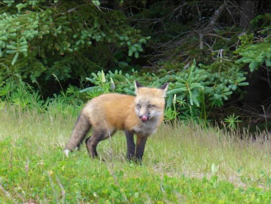 Brackley Beach, Canada: Wildlife