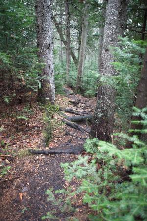 Algonquin Provincial Park, Canadá: Old Railway Bike Trail