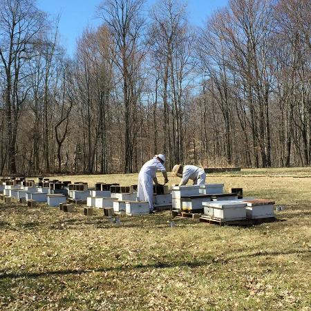 Hunters Honey Farm: Working bees