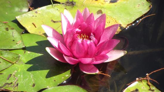 Jardin aquatique aux fleurs de l 39 eau graveson ce qu 39 il for Jardin aux fleurs