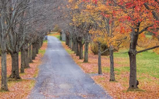 The Mansion at Noble Lane: Tree lined Drive in Autumn