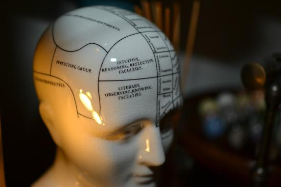 Hamish Hawkin Phrenology Head The Perfect Gift For Someone Who Has Everything