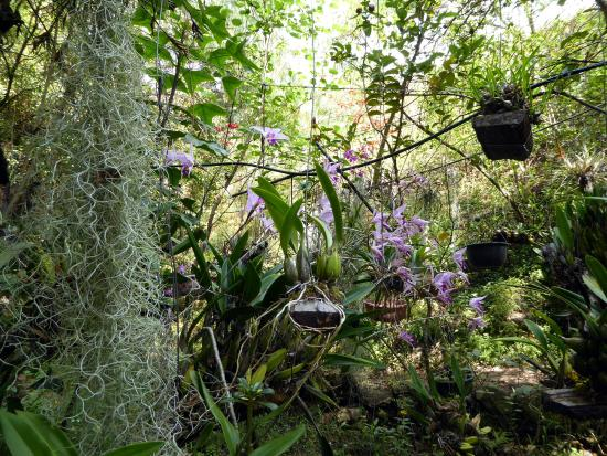San Andres Huayapam, Mexico: Orchids in bloom