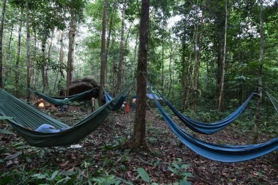 Amazon Antonio Jungle Tours Sleeping under the tree canopy & Sleeping under the tree canopy - Picture of Amazon Antonio Jungle ...