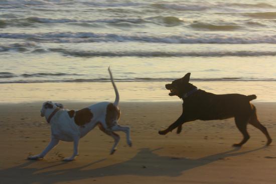 Seaside Motel and Condominiums: lovin the beach!!