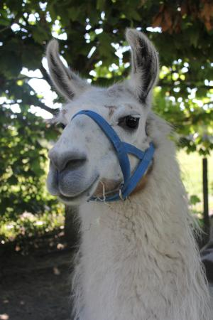 Hawkes Bay Farmyard Zoo: Gets close to all of your favourite farm animals