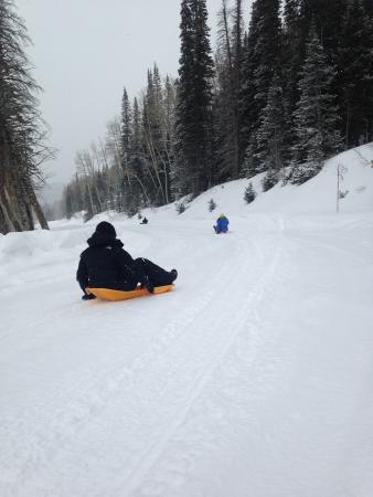 Exclusive Excursions: Snowshoe and Sled Tour!
