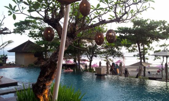 Pildiotsingu Bali - Wild Orchid tulemus