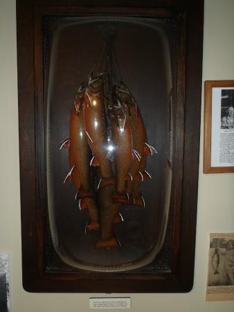 Oquossoc, ME: Vintage Herb Welch Mounts
