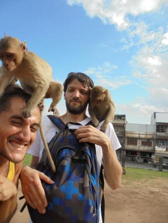 Les singes en liberté: fotografía de Phra Prang Sam Yot, Lop Buri - TripAdvisor