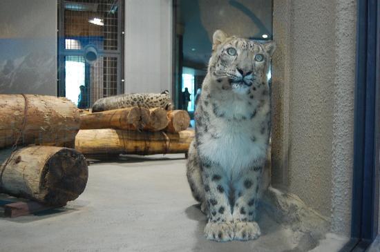 円山動物園 - Picture of Maruyama Zoo, Sapporo - TripAdvisor