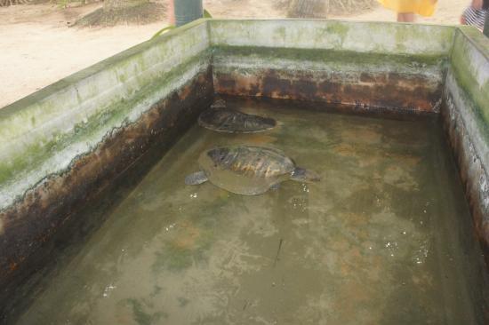Μπεντότα, Σρι Λάνκα: Dirty, cramped conditions