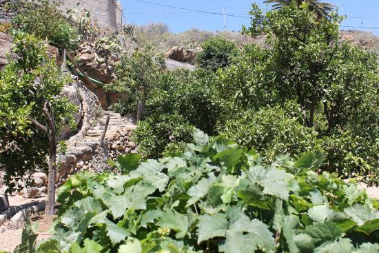 Casa Rural Anton Piche : huerto ecologico