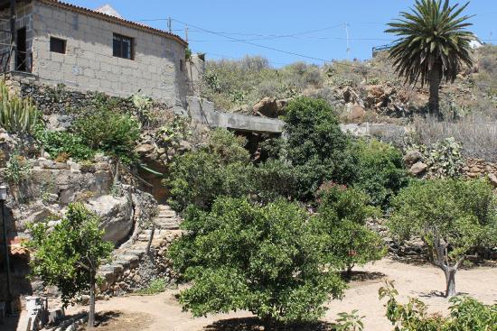 Casa Rural Anton Piche : huerto de frutales