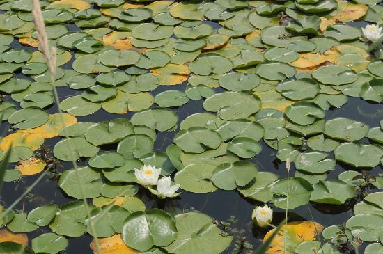 Green Lake Park : Tres