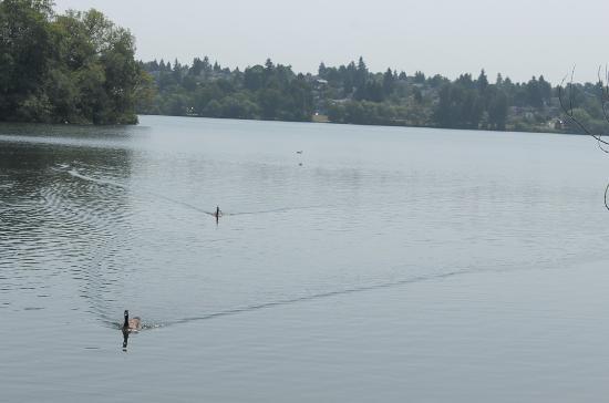 Green Lake Park : La armada