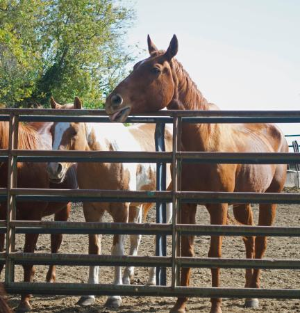 Concordia, MO: some of the horses at the farm