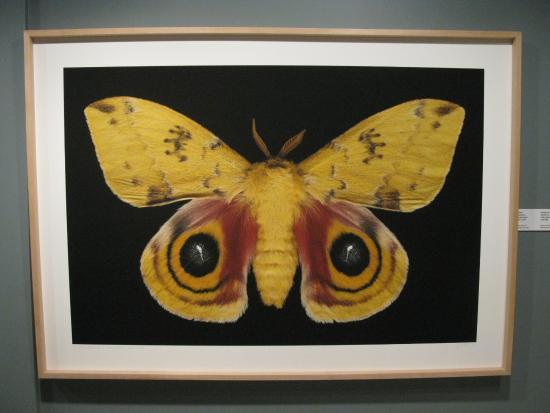 New Brunswick Museum: Moth in detail