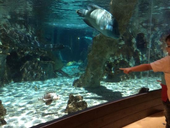 mais peixes picture of aquarium sea val d europe marne la vallee tripadvisor