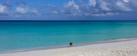 Bimini: The beach across the street.  Heaven!