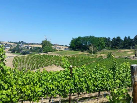 Naches Heights Vineyard