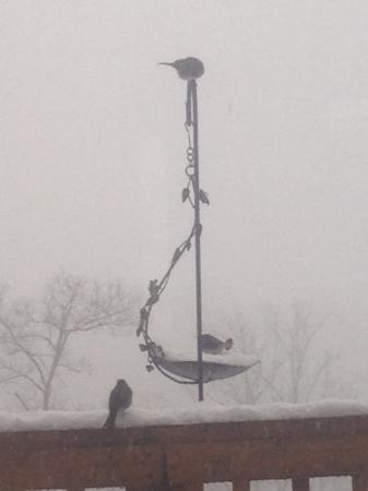 Linden, VA: feeding the birds during the storm