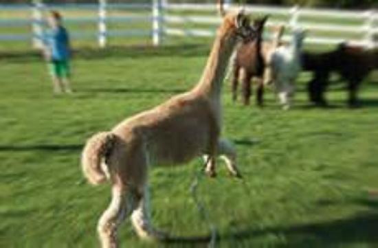Groton, MA: Katrina having a happy jump