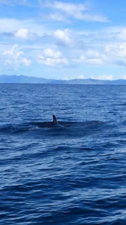 Playa Hermosa, Κόστα Ρίκα: Pilot Whale