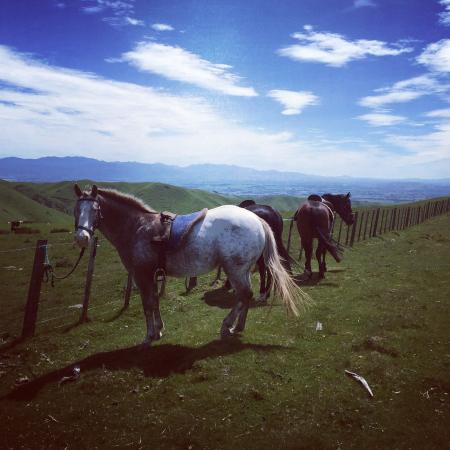 Patuna Farm Adventures : Ridge Top ride