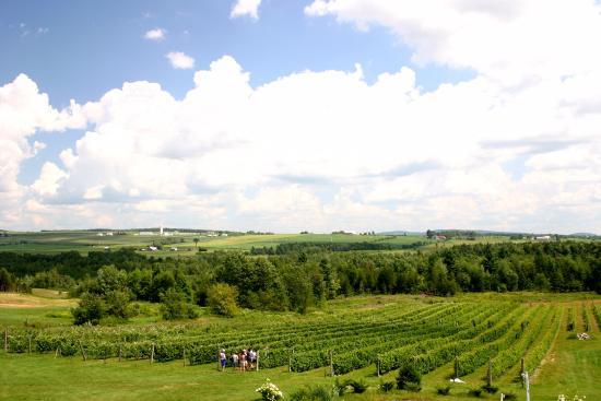 Vignoble Les Côtes du Gavet