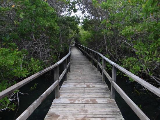 Puerto Villamil, เอกวาดอร์: O caminho