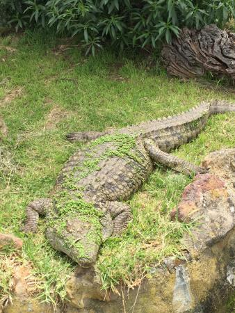 Some Of Their Reptile Parks Sights Picture Of Garden Route Game Lodge Albertina Tripadvisor