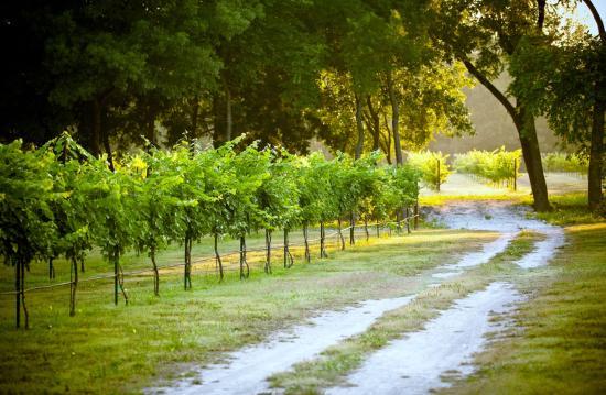 Mitas Hill Vineyard