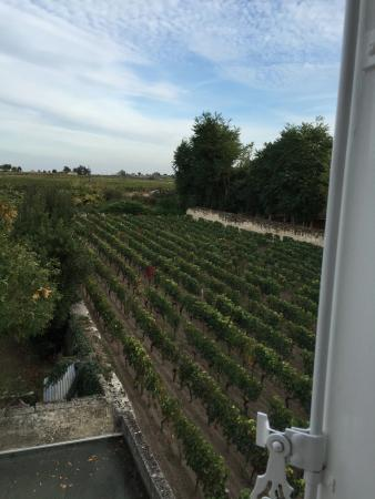 Auberge de la Commanderie: Vineyards everywhere!