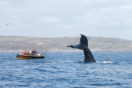 Passengers watching a Humpback whale from a Baltimore Sea Safari boat trip in West Cork