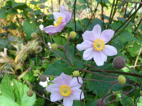 Agamont Park: Flower in bloom