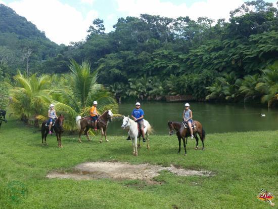 Draco Rosa's Farm , Hacienda Horizonte, Utuado PR.
