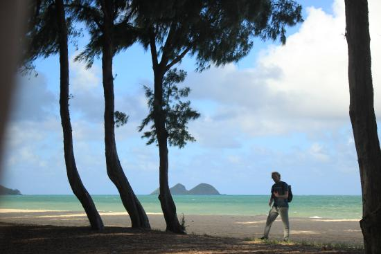 Oahu Tours Reviews