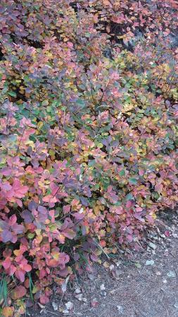 Carso Triestino : I colori del Carso in autunno